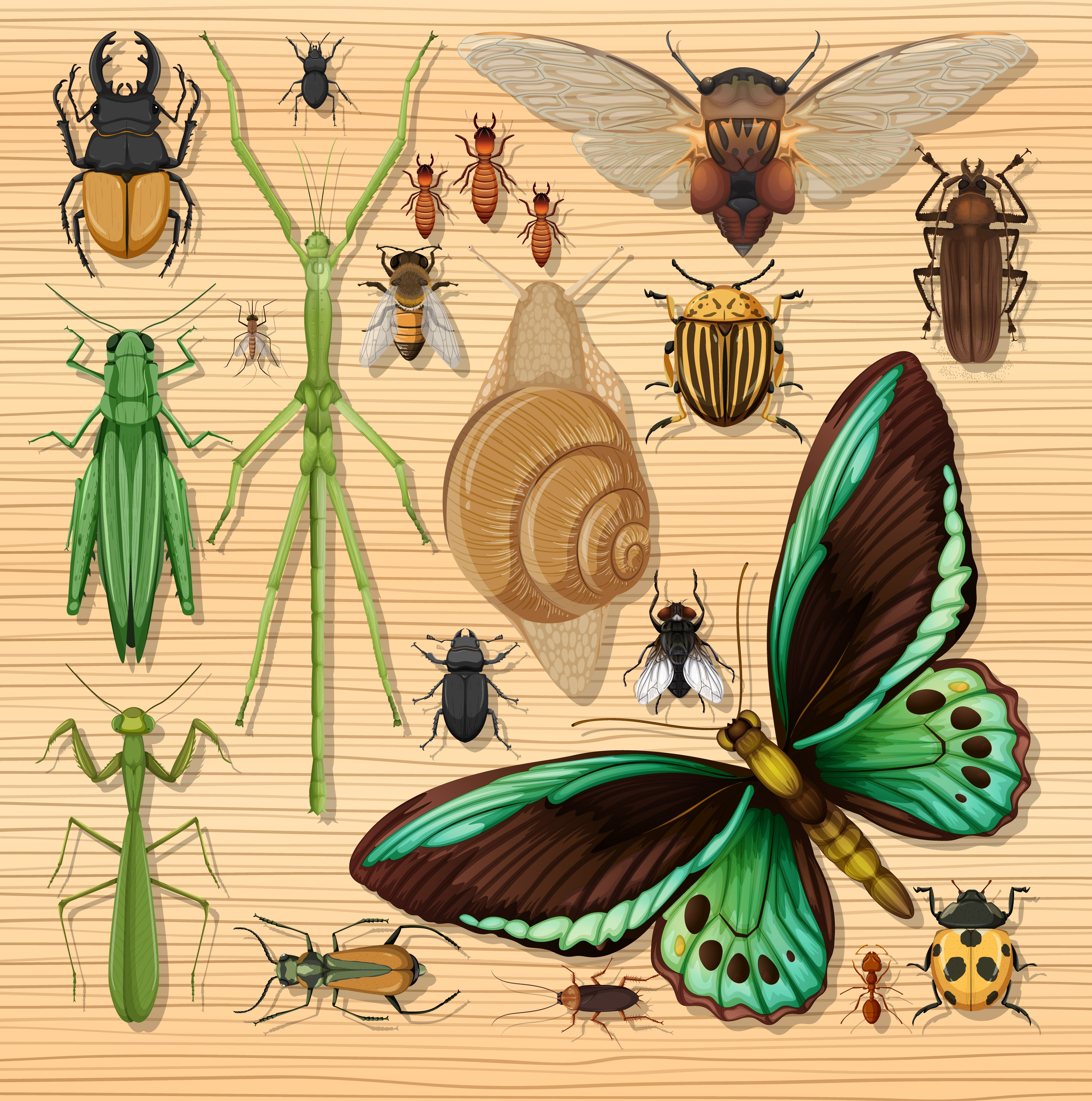 Set of different insects on wooden wallpaper 1416556 Vector Art at 4695x4733