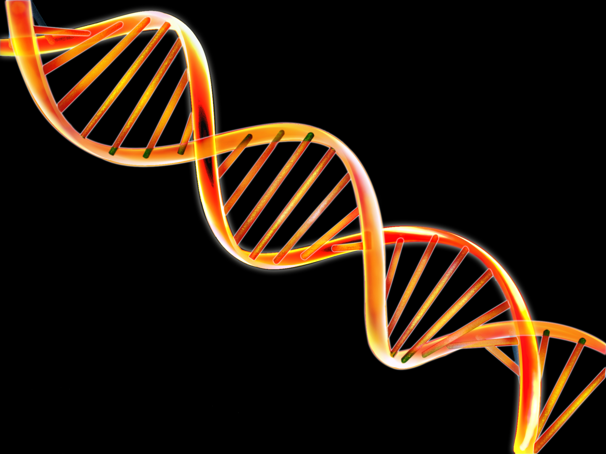 Analogy Double Helix is like two twist ropes that supports the 2048x1536
