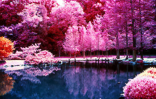 beautiful nature photography tumblr 500x318