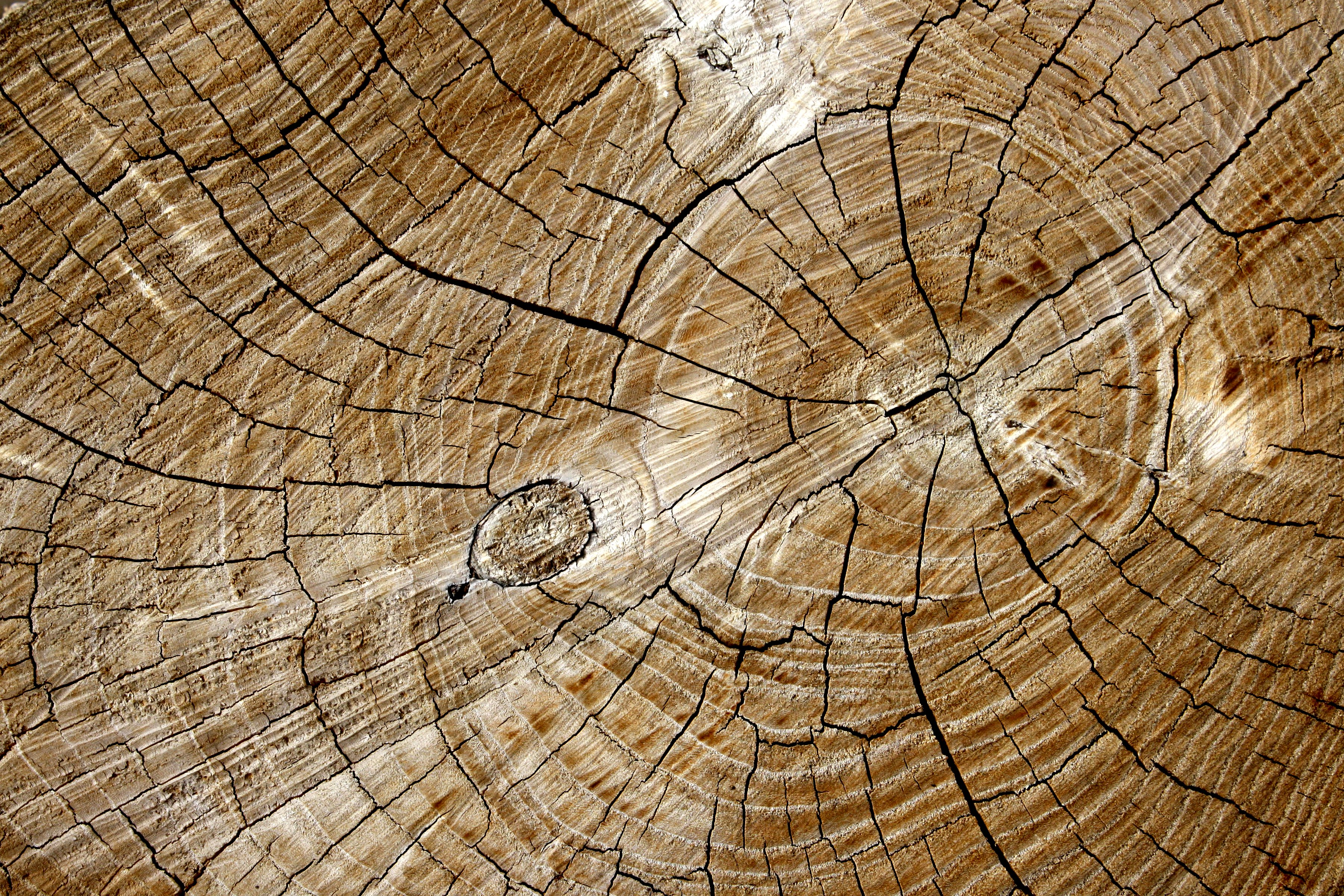 Cut End of Log with Tree Rings Texture   High Resolution Photo 3600x2400