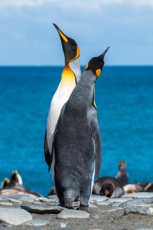 500 Best Penguin Pictures [HD] Download Images on Unsplash 1000x1498