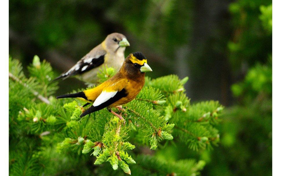712611  wallpaper branch birds bird pjpg 969x606