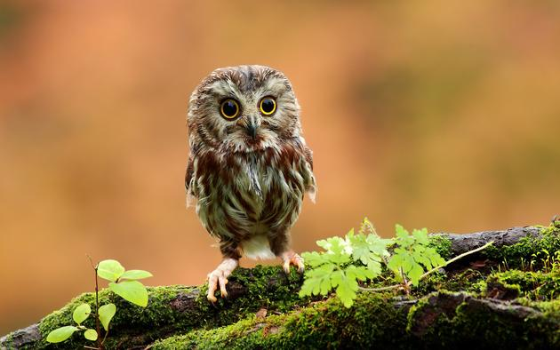 Daily Wallpaper Baby Owl I Like To Waste My Time 630x394