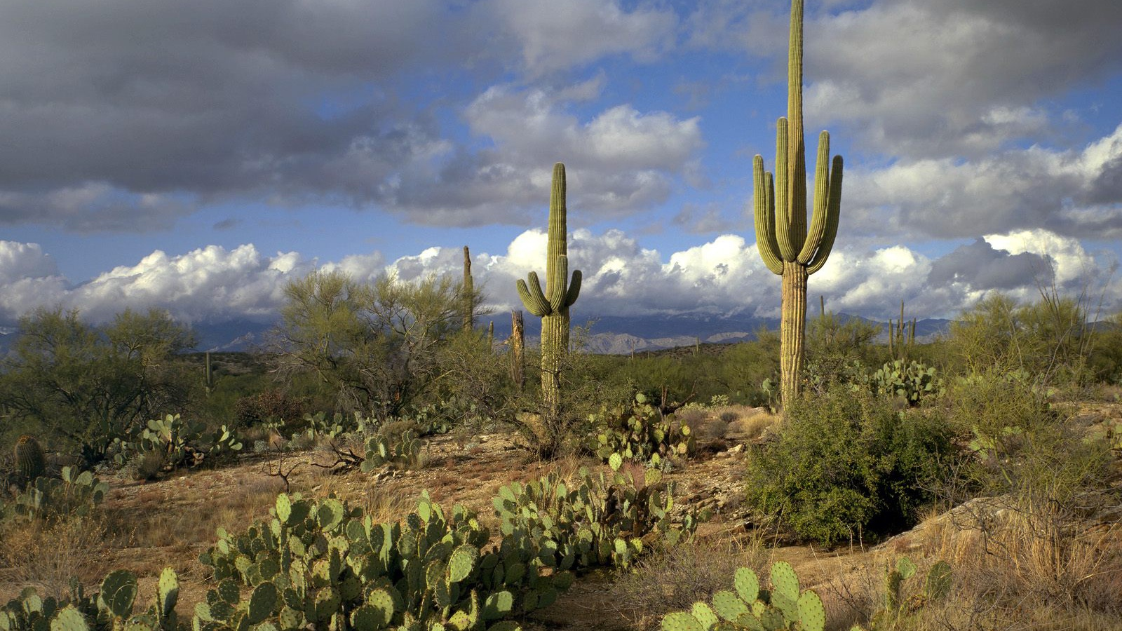 Best 41 Saguaro National Park Wallpaper on HipWallpaper 1600x900