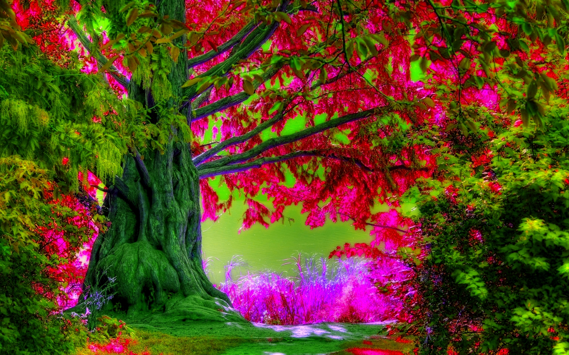 Free Spring Tree HD Wallpaper