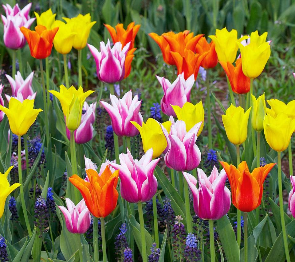 flowers for flower lovers Beautiful flowers desktop wallpapers 960x854