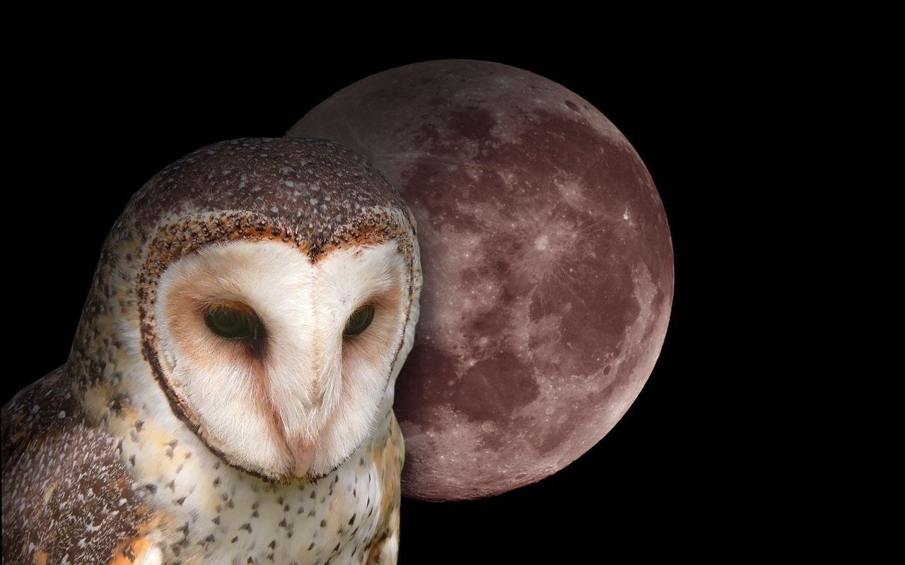 Owl Wallpapers Fun Animals Wiki Videos Pictures Stories 1280x800