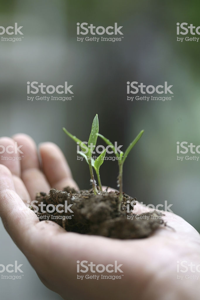 Sapling Background Stock Photo More Pictures of Achievement   iStock 683x1024