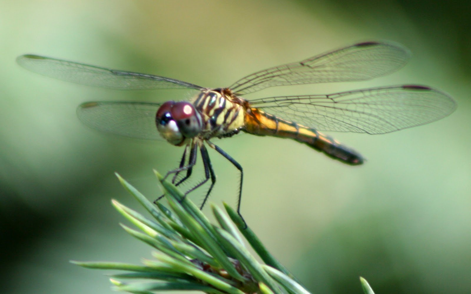 Dragon fly wallpapers Neptunes Dreams 1600x1000