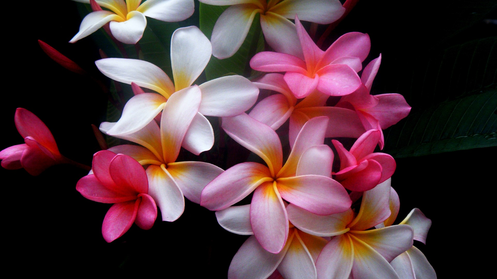 1920x1080 Beautiful flowers desktop PC and Mac wallpaper 1920x1080