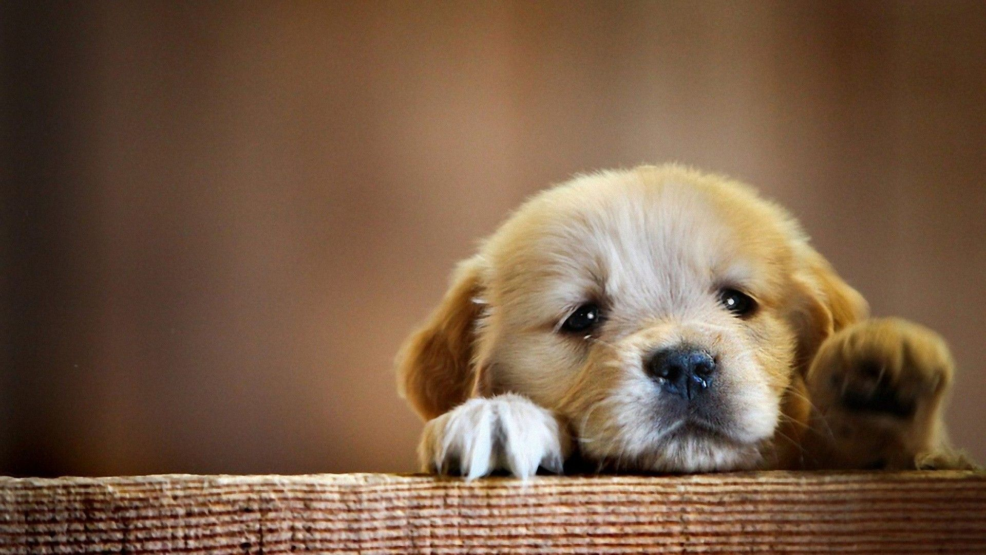 Cute Puppy Wallpapers   Top Cute Puppy Backgrounds 1920x1080