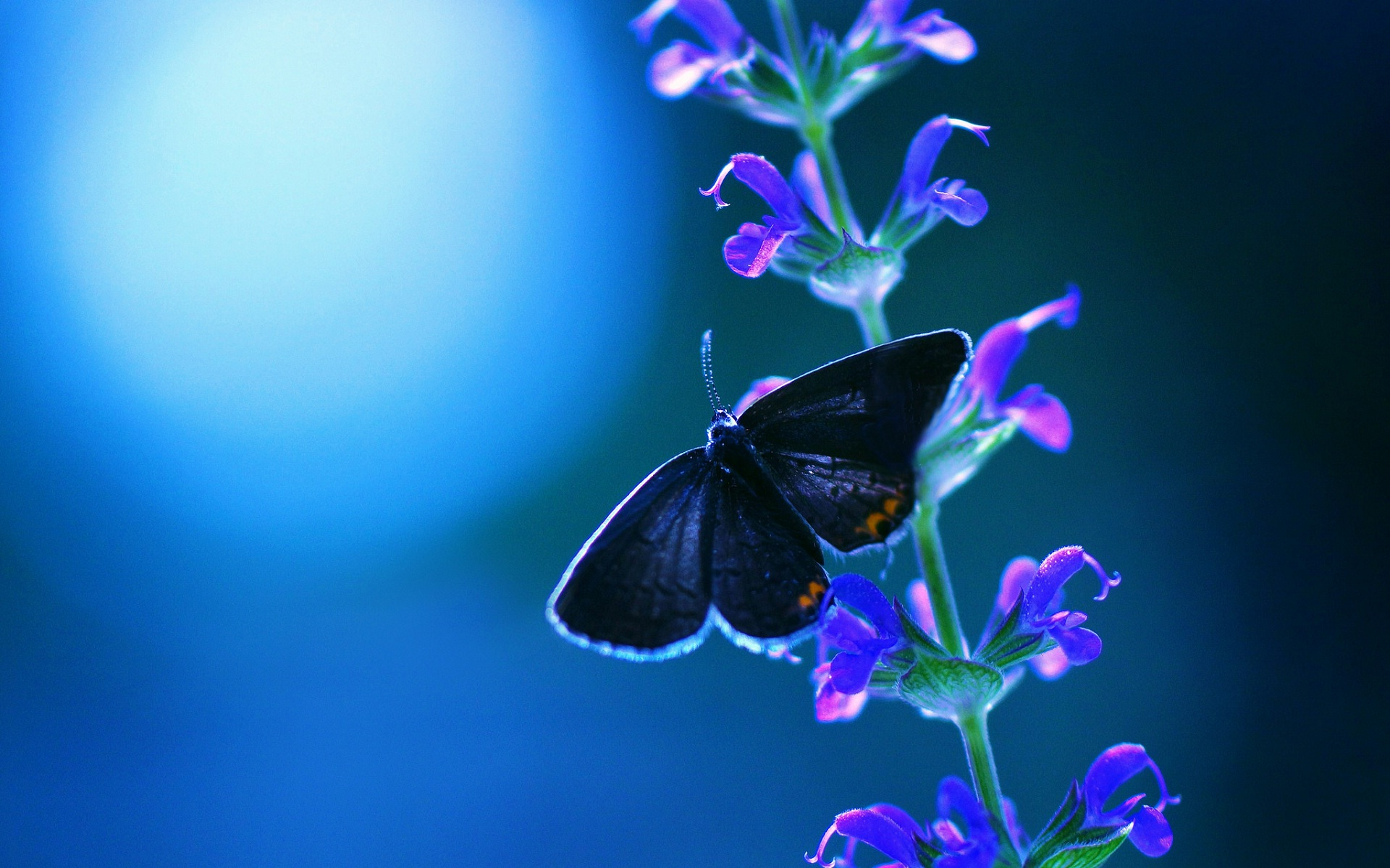 Cool night and blue butterfly and flowers wallpapers HD 1920x1200