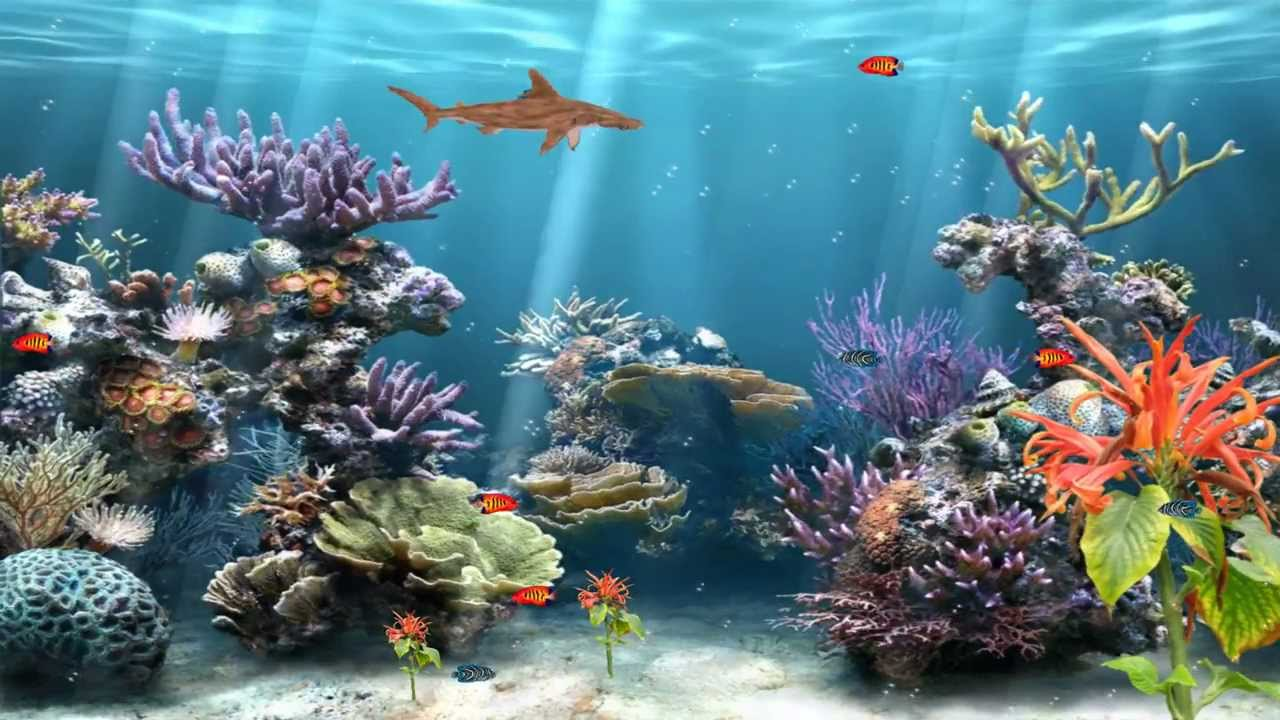 Coral Reef Aquarium Animated Wallpaper httpwwwdesktopanimatedcom 1280x720