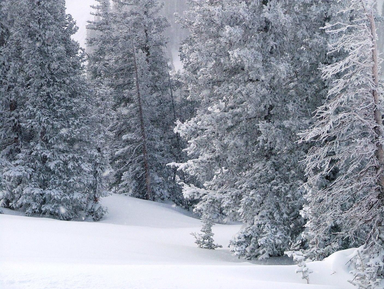 Colorado Scenes Snowy Trees Snow Snow and more Snow 1408x1060