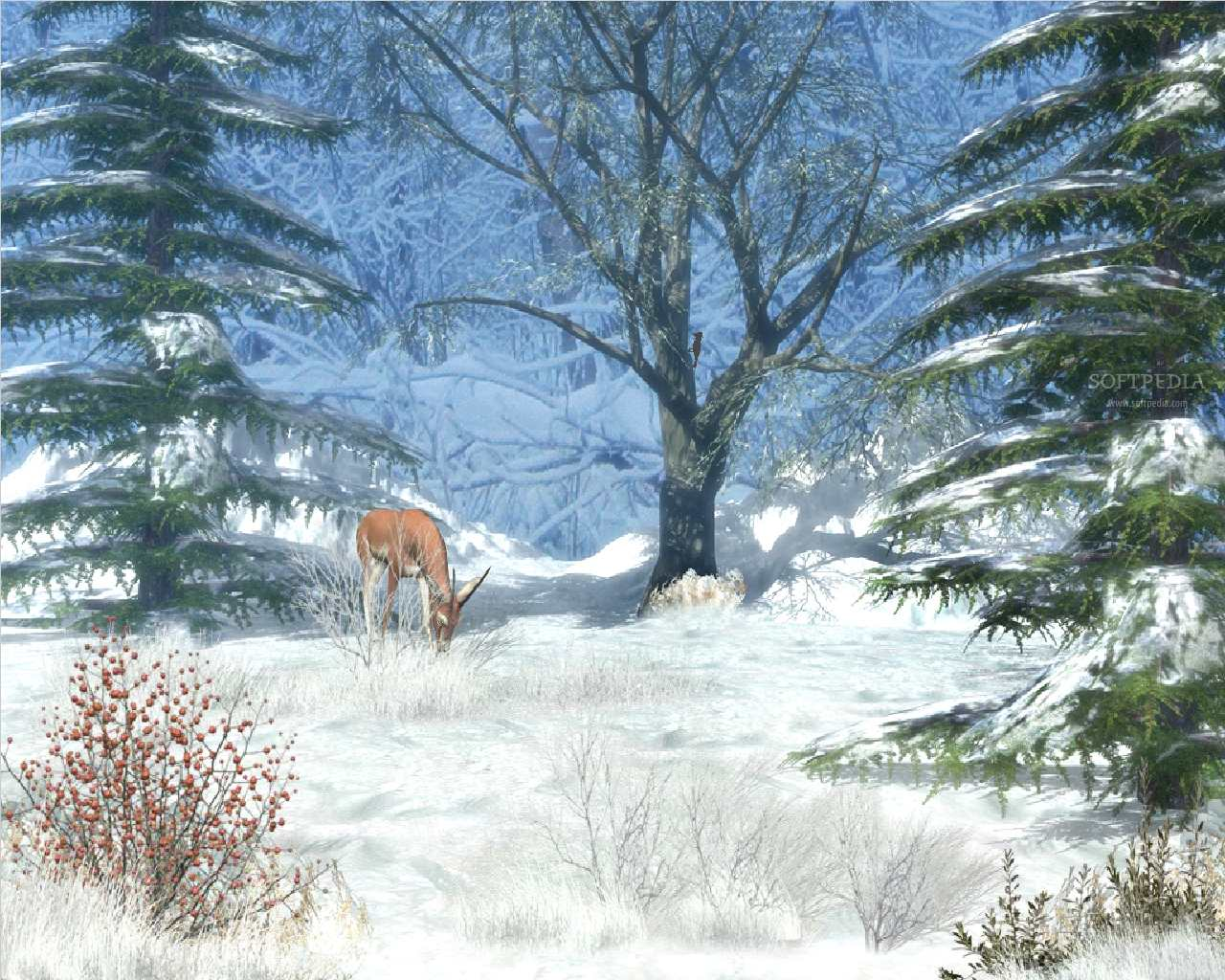 Winter Afternoon   Animated Wallpaper   This is the image displayed by 1280x1024