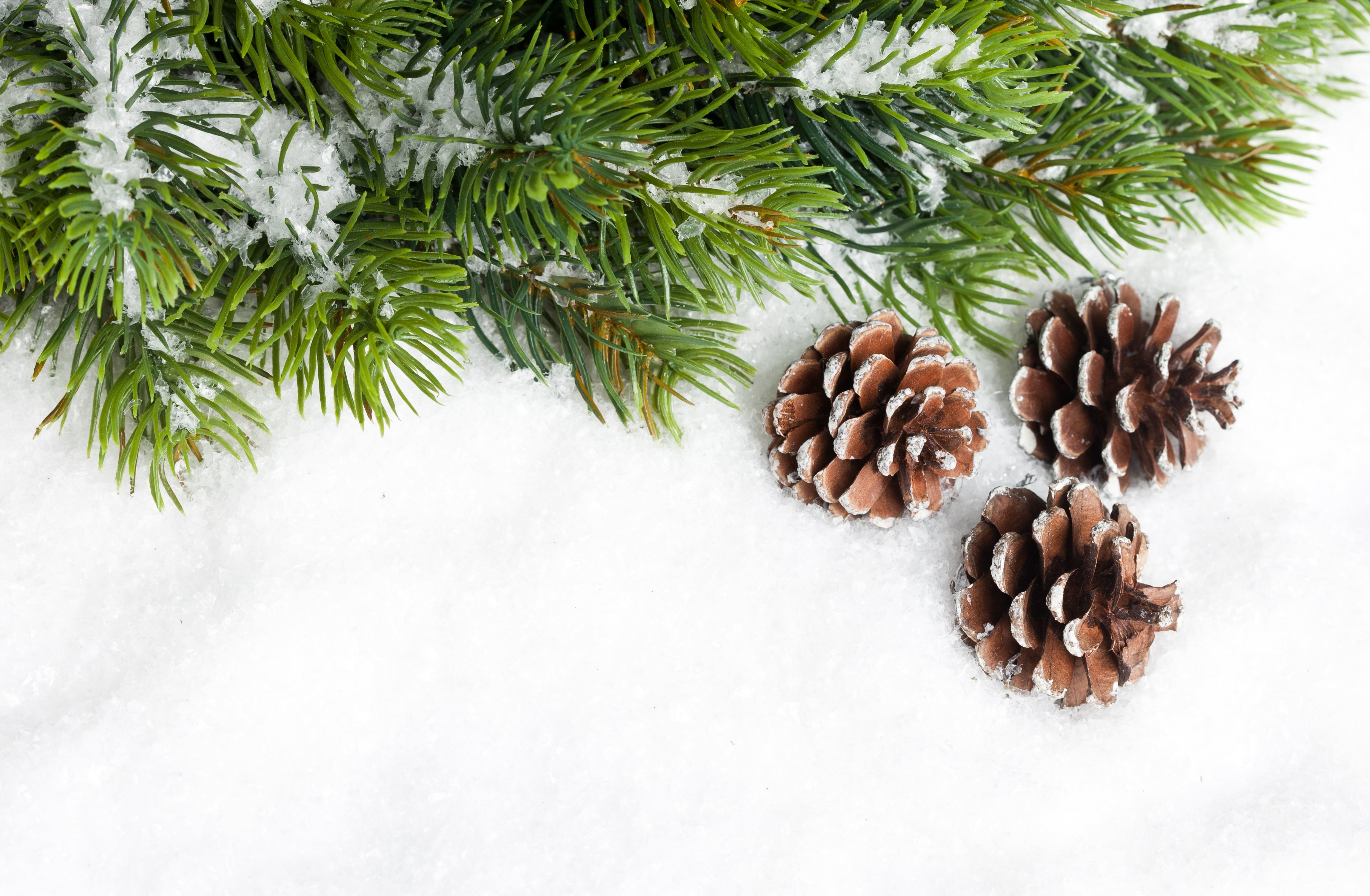 Pine cone wallpaper wallpapersafari for What to do with pine cones for christmas