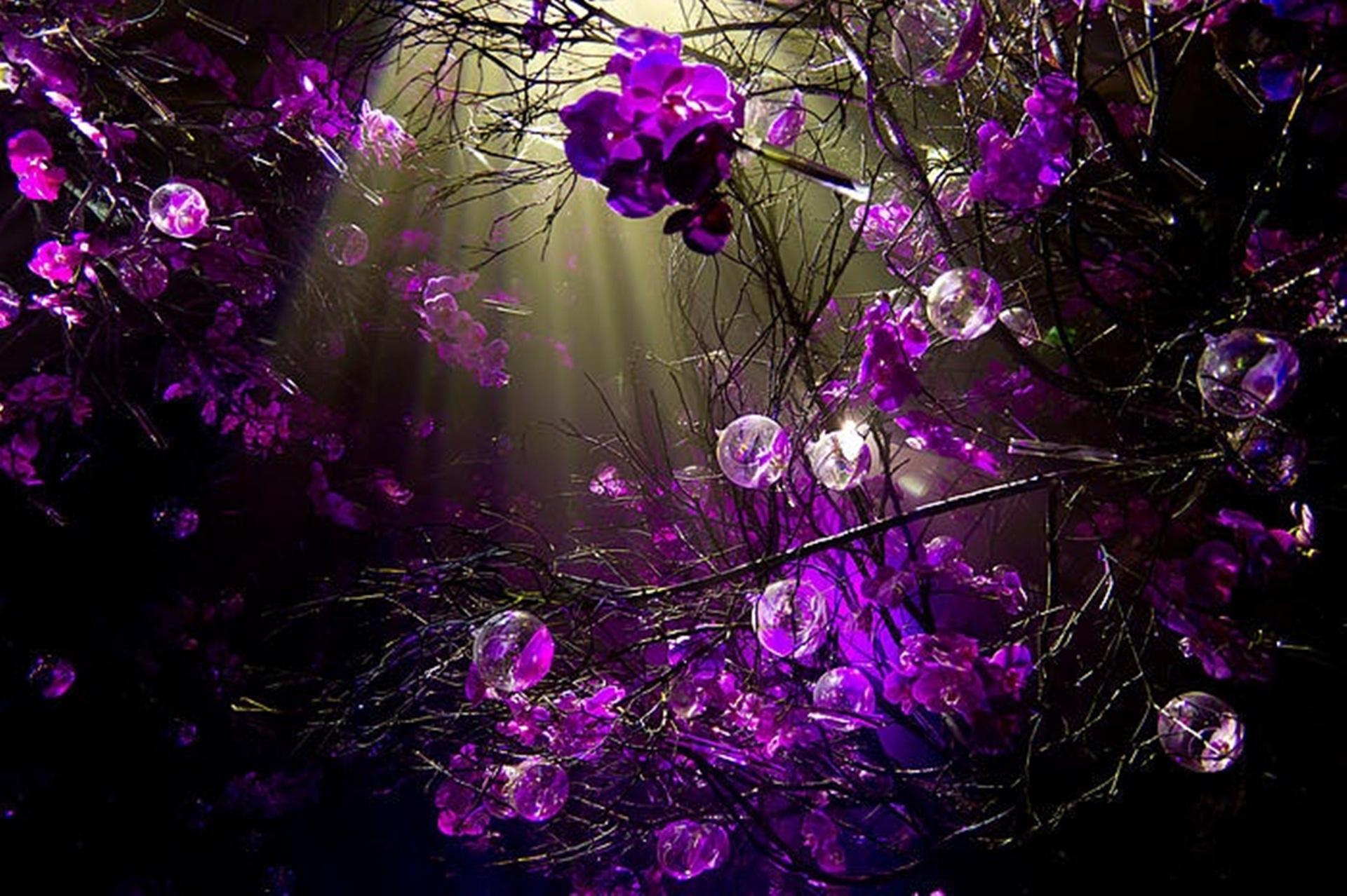 purple sprigs desktop background wallpaper by doantrangnguyen 1920x1278