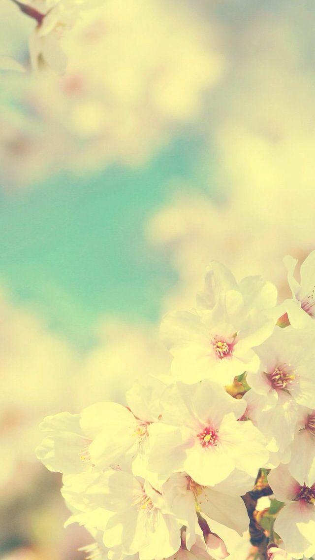 Iphone wallpaper cherry blossom iPhone wallpapers Pinterest 640x1136