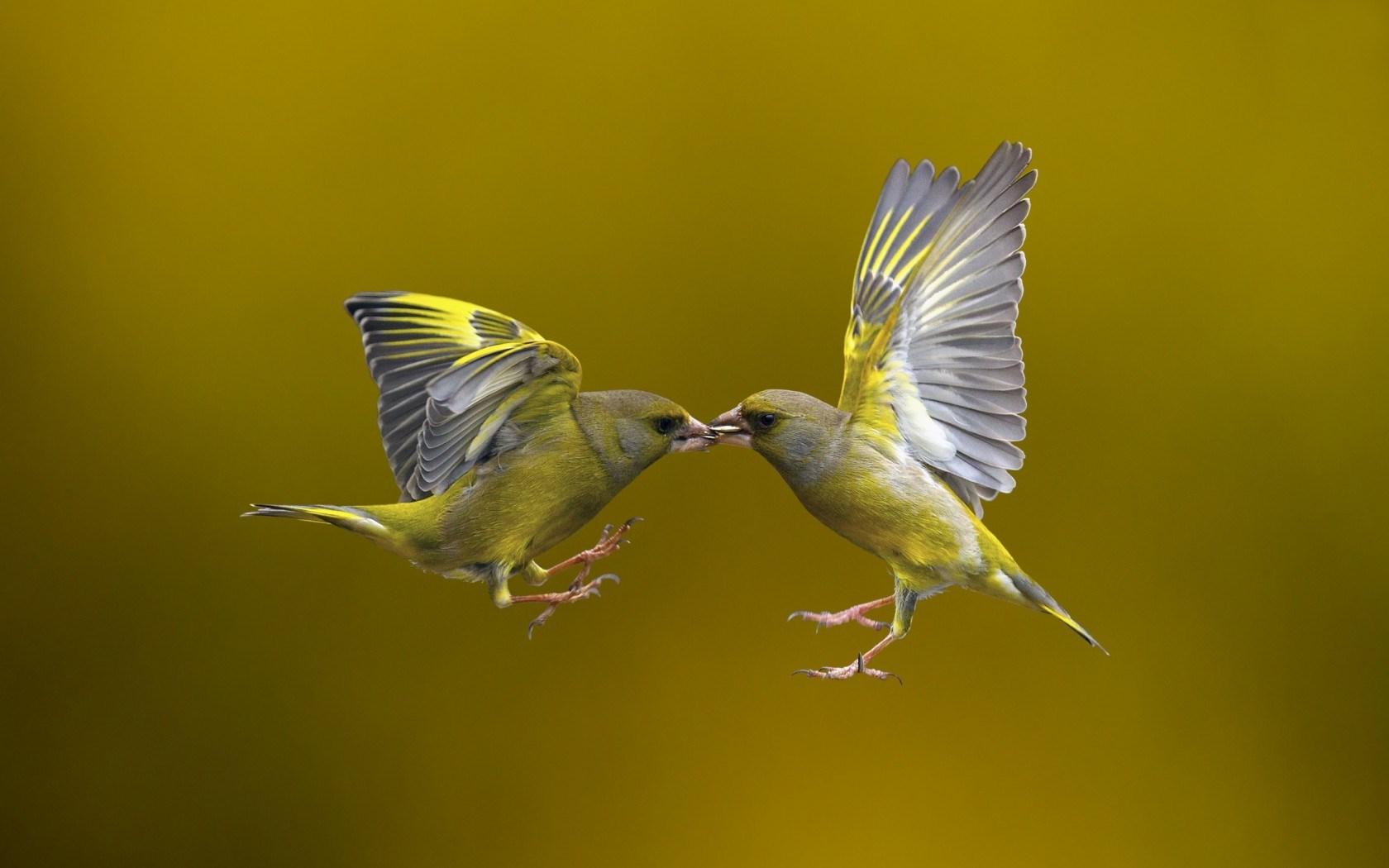 Flying Birds HD Wallpapers 1680x1050