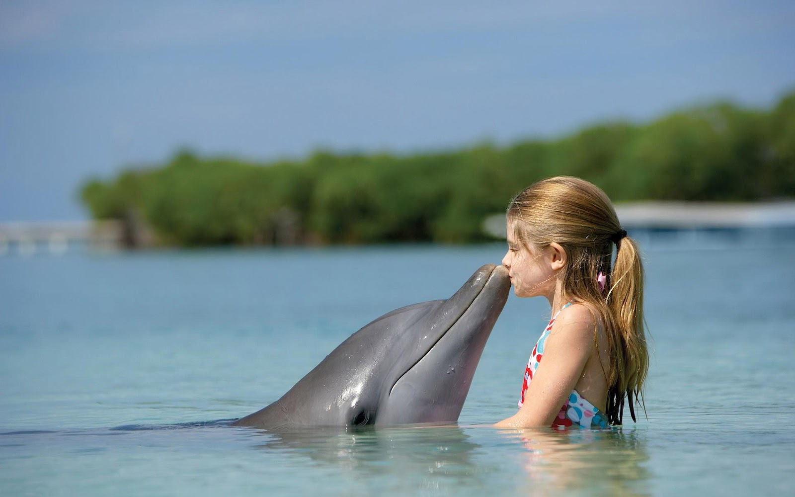 hd dolphin wallpaper with a dolphin kissing a little girl dolphins 1600x1000
