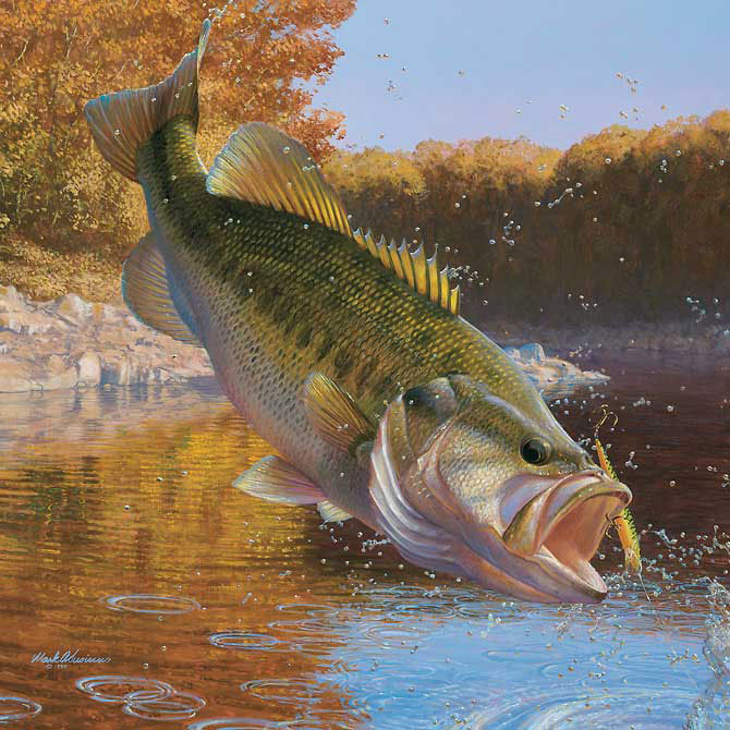 Lake Amistad Bass Fishing An Overview Bass Fishing Tips 670x670