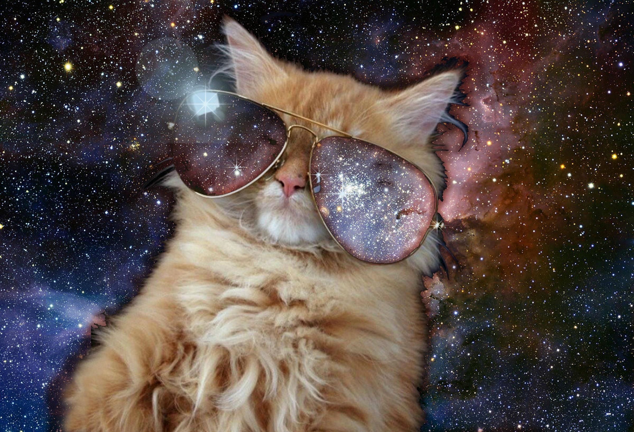 Space Cat Tumblr 2399x1636
