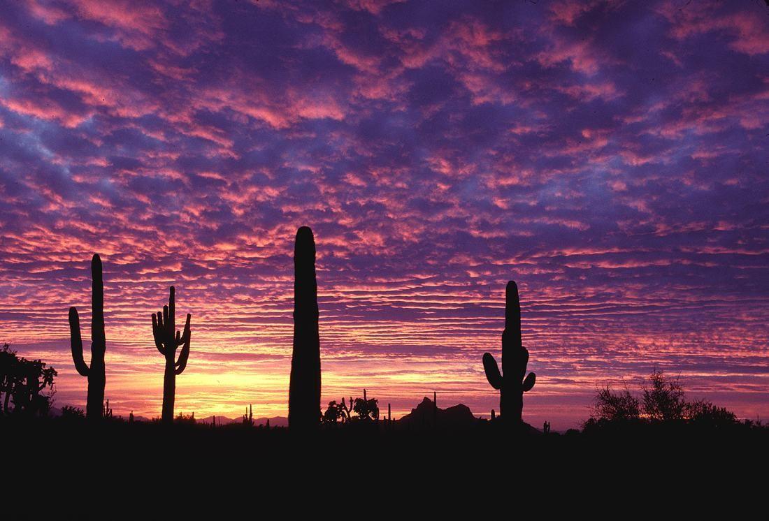 55 AZ Sunset Wallpapers   Download at WallpaperBro 1100x746