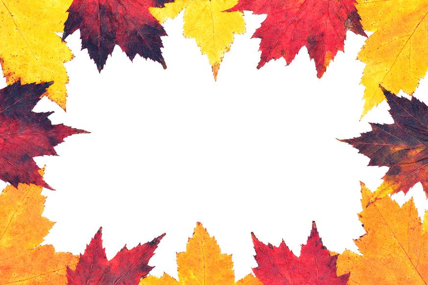 Autumn leaves border Pictures Stock Photos Wild Retina 874x583