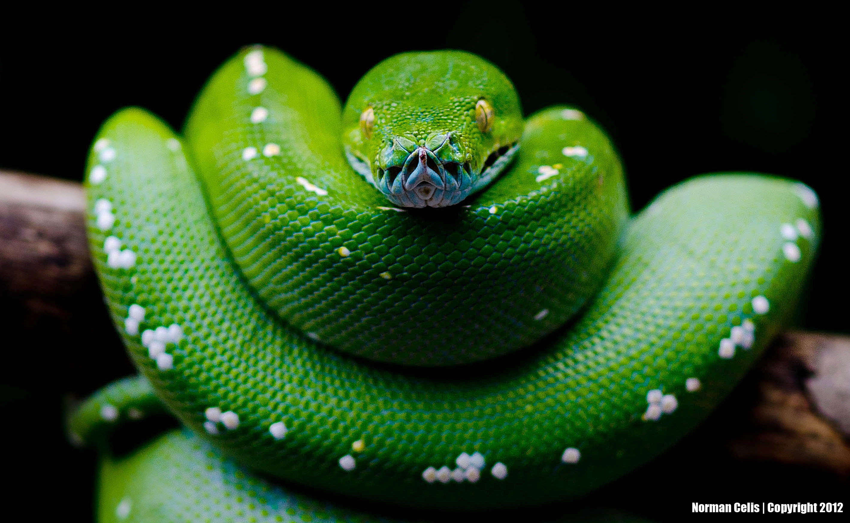 43 Python Set Wallpaper On Wallpapersafari