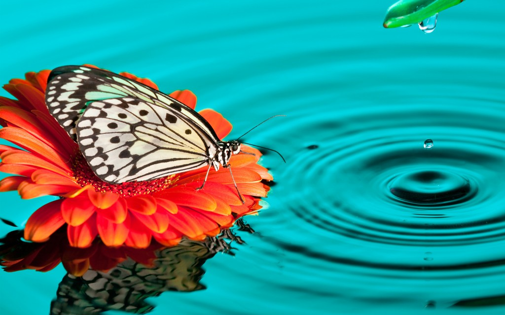 Free Download 4k Butterfly Wallpapers High Quality Download 1024x640 For Your Desktop Mobile Tablet Explore 32 Wallpaper Hd Butterfly Hd Butterfly Wallpaper Butterfly Hd Wallpapers Butterfly Wallpaper Hd