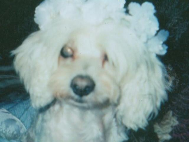 Very Cute Puppy Wallpaper 640x480