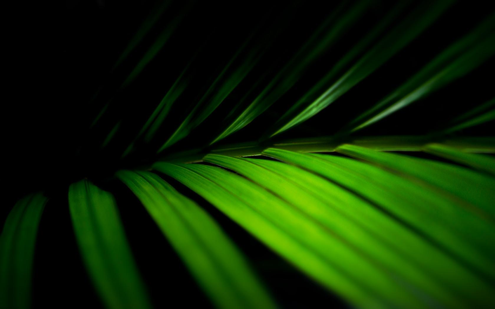 Palm Fronds Vista Desktop Background 1680x1050 pixel Popular HD 1680x1050