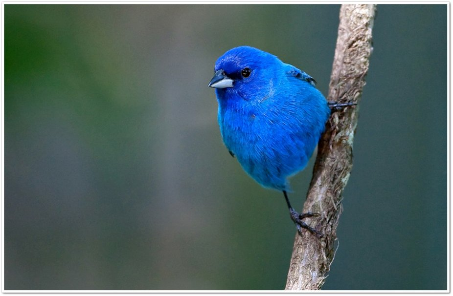 Blue Bird wallpaper 926x606