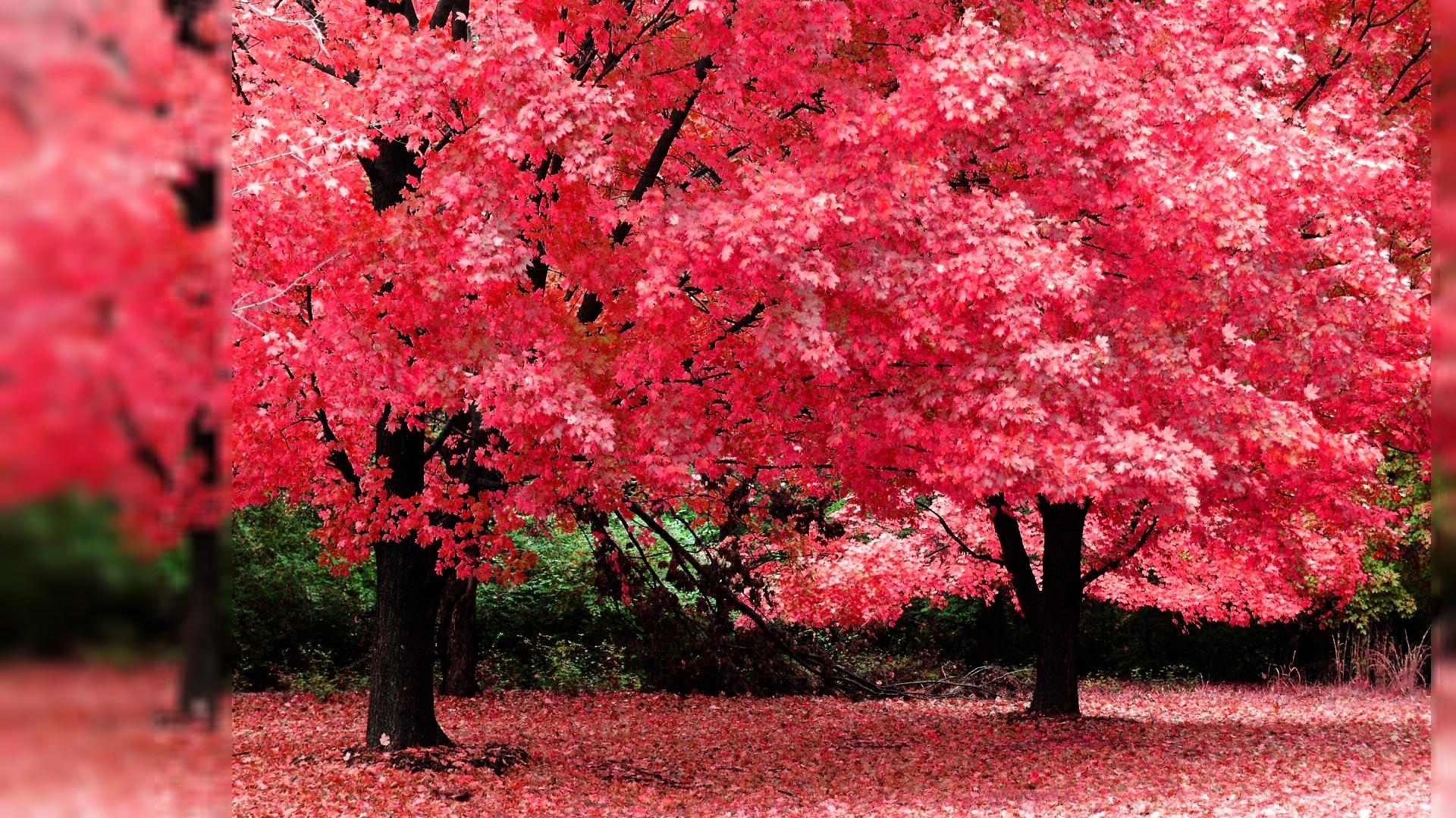Pics Photos - Fall Color Wallpaper Widescreen Hd Desktop S ...