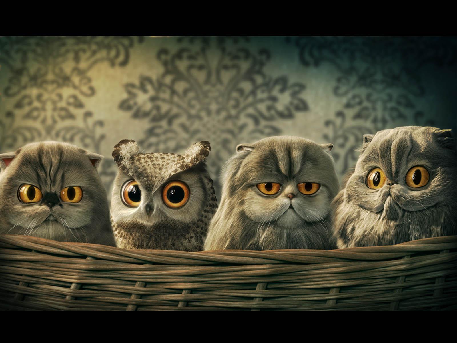 Owls Screensavers Desktop Wallpaper