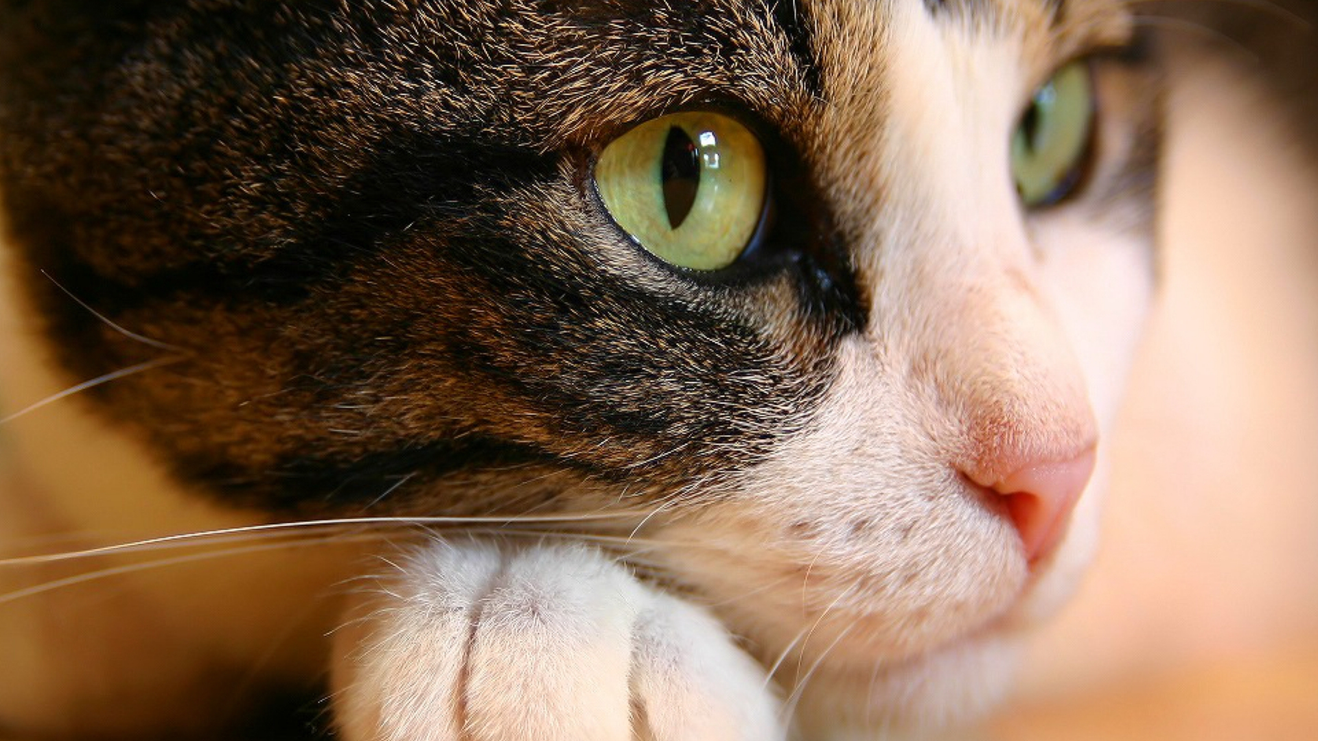 Cat Eyes Wallpapers HD Wallpapers 1920x1080