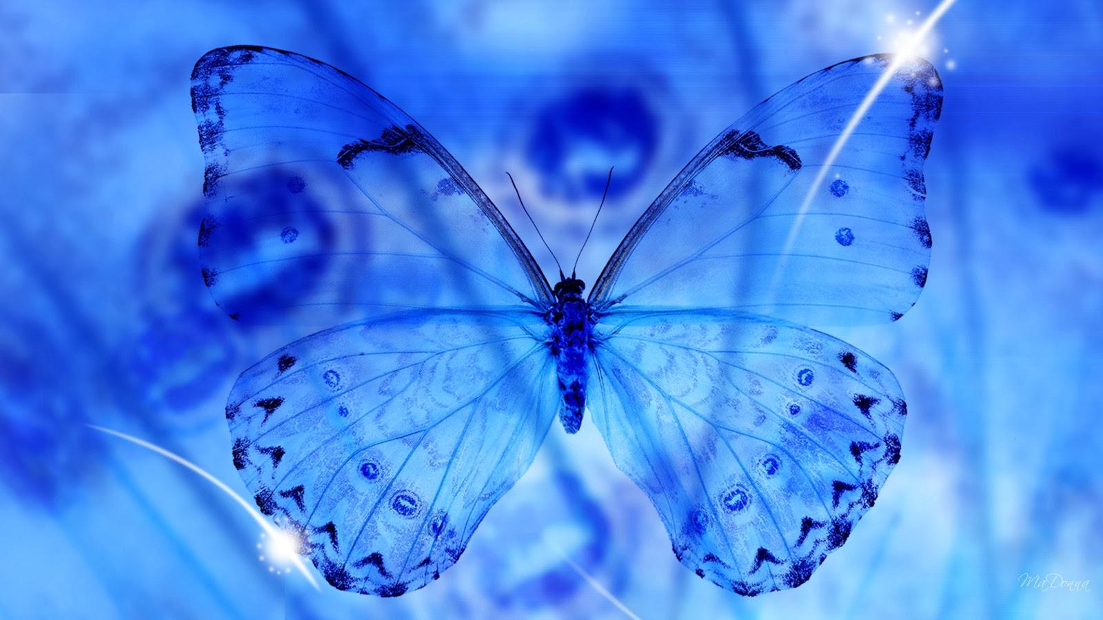 Blue butterfly 3d desktop wallpapers   beautiful desktop 1600x900