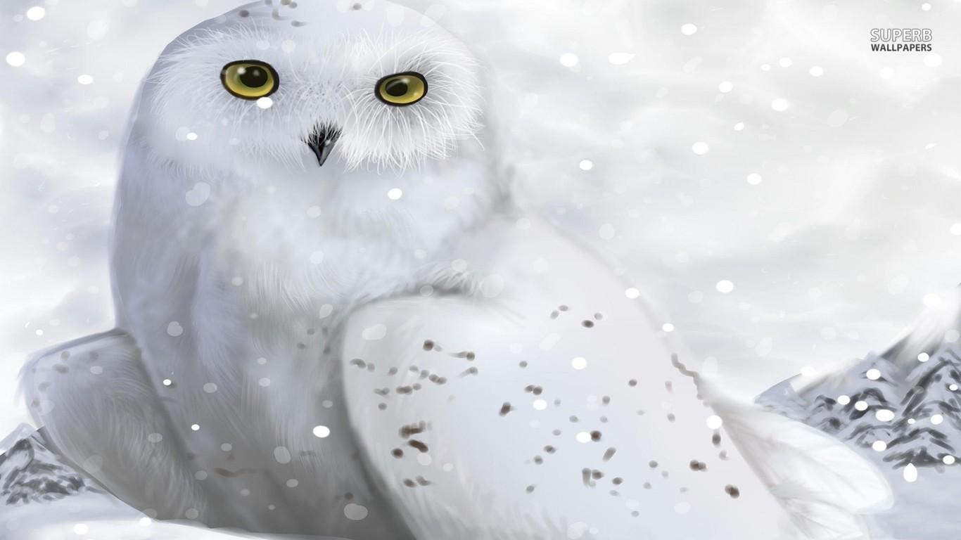 white owl wallpaper hd 4   High Definition Widescreen Wallpapers 1366x768