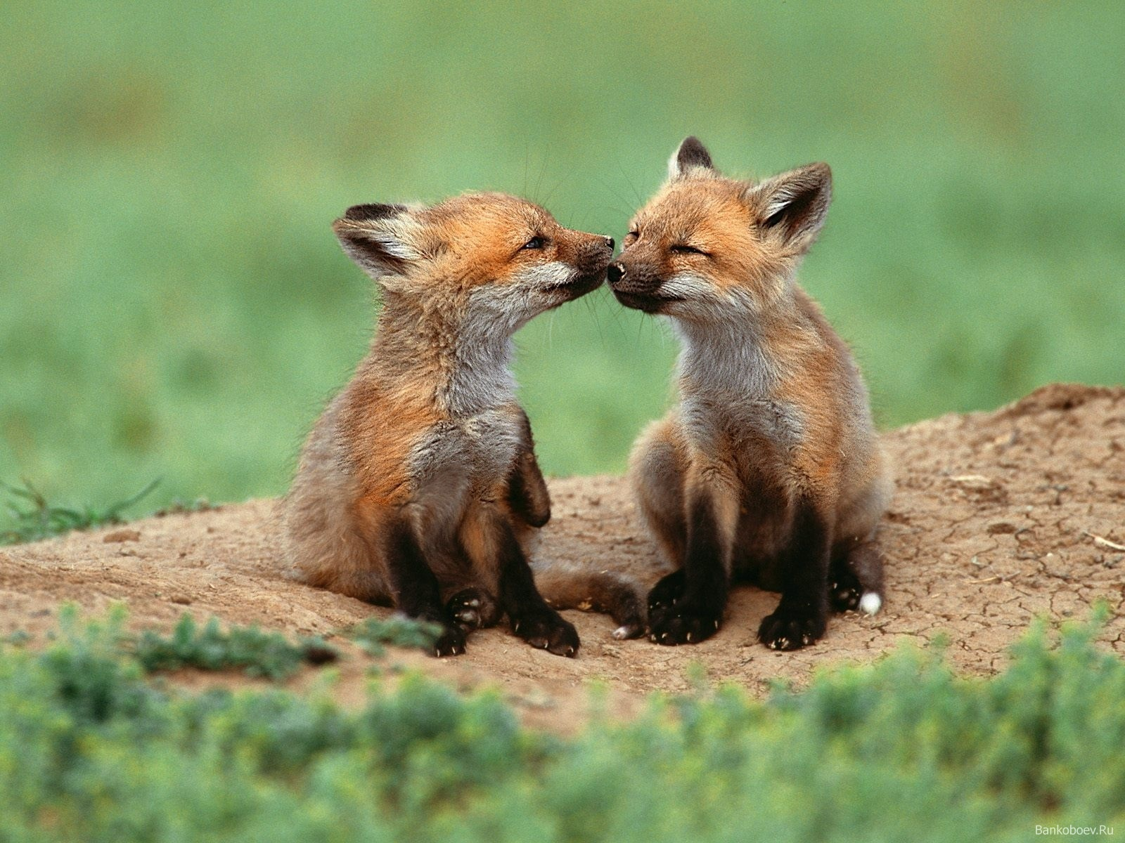 Cute Baby Fox Wallpaper Images Pictures   Becuo 1600x1200