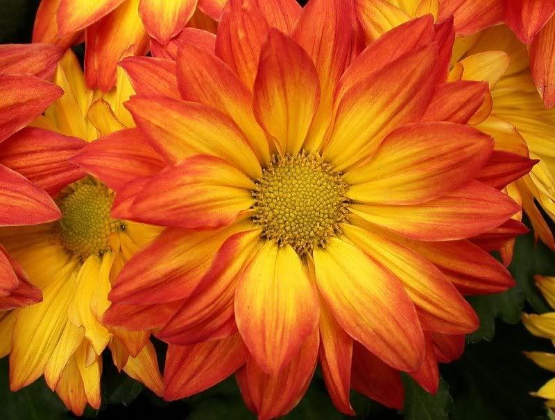 Bright Flower Wallpaper: Bright Orange Wallpaper