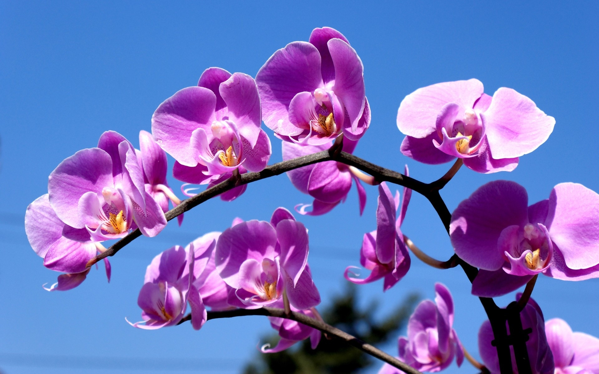Purple Orchid Wallpaper Purple Orchid Wallpaper 1920x1200