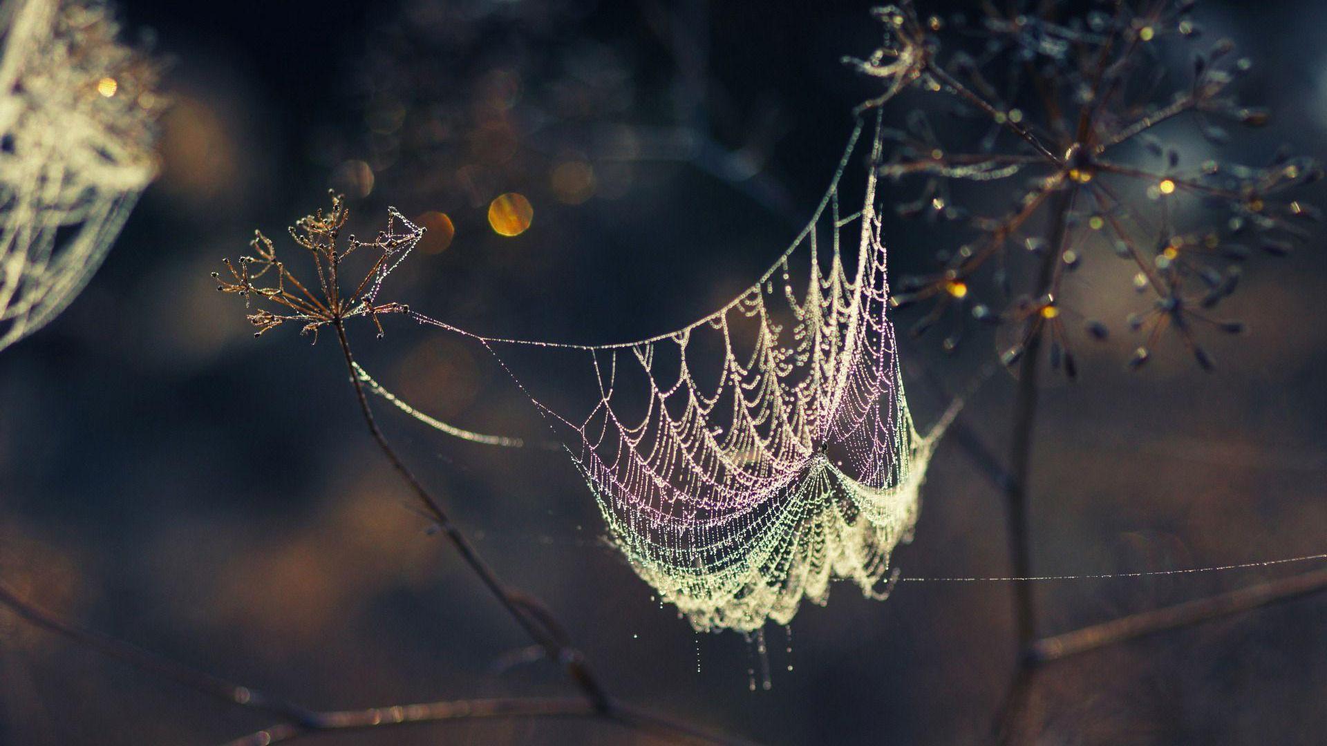 spider web wallpaper HD 1920x1080