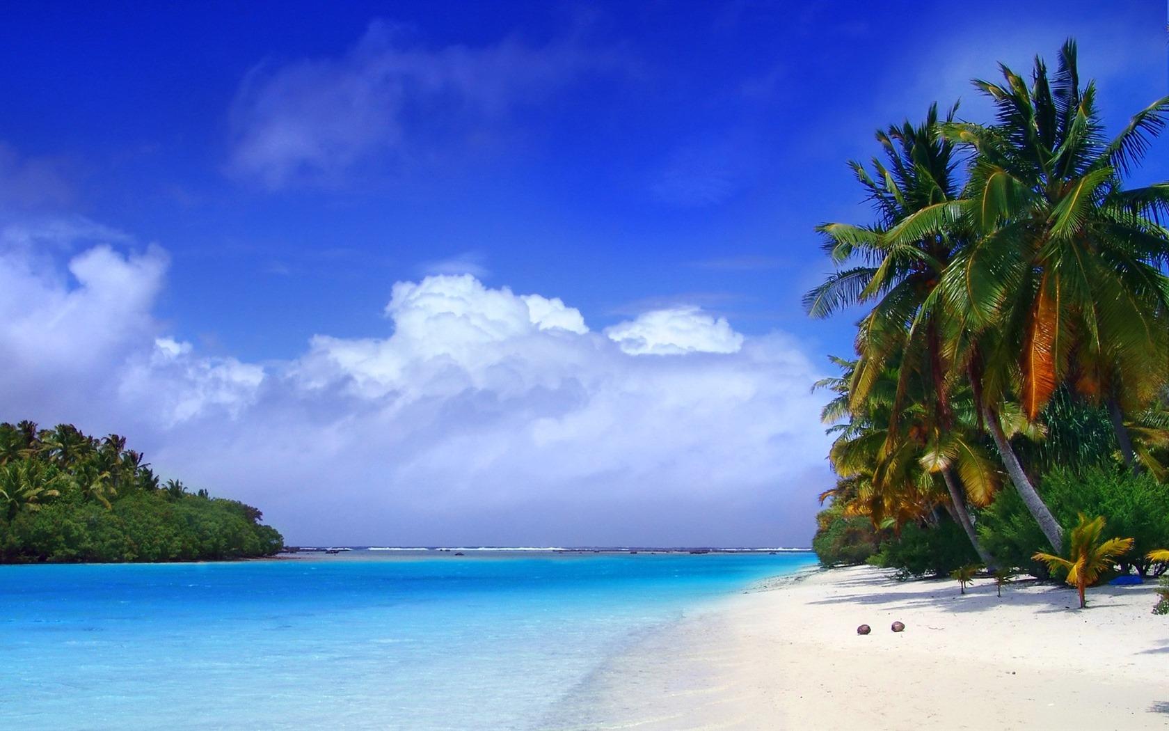 28+ HD Tropical Wallpaper 1680x1050 on WallpaperSafari