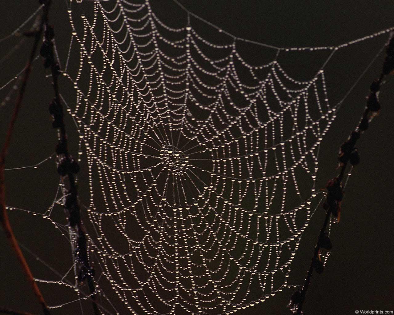 spider web 1280x1024