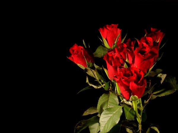 bouquet of red roses A bouquet of red roses on a black background 600x449
