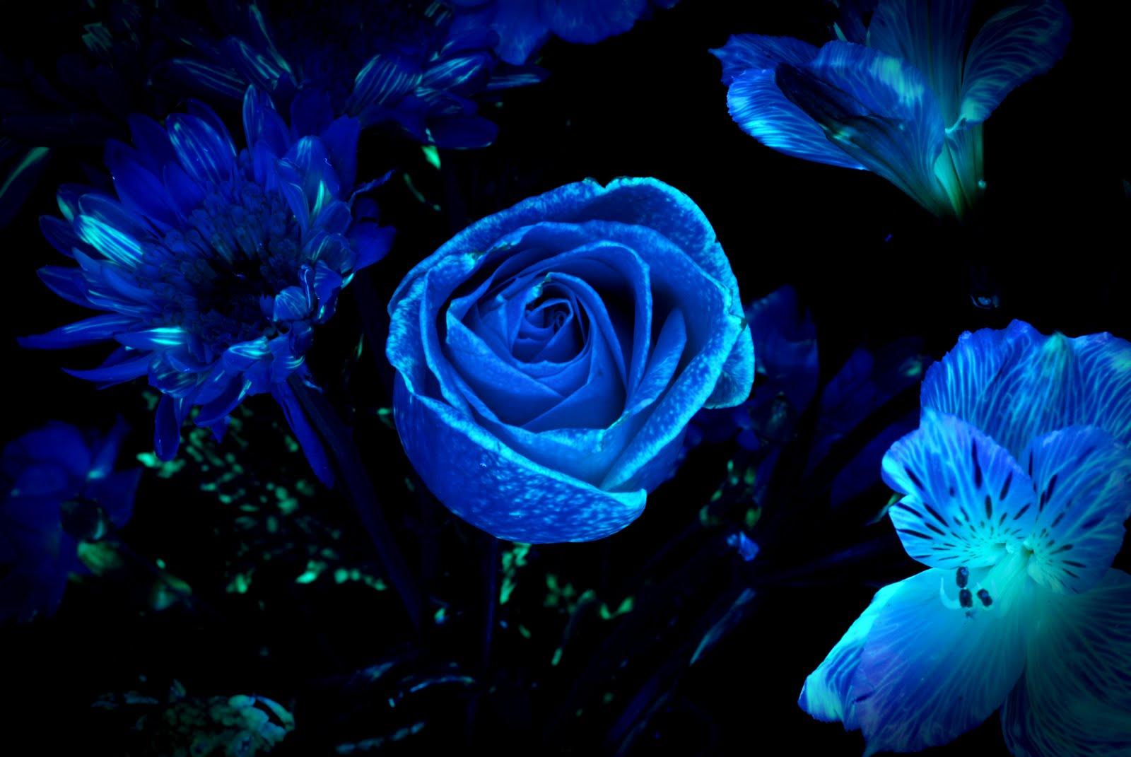 Glowing Flower Wallpapers - WallpaperSafari