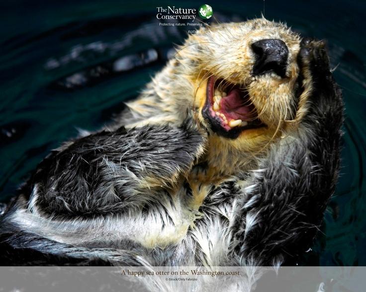 Sea Otter Wallpaper   natureorg Cuties Pinterest 736x588
