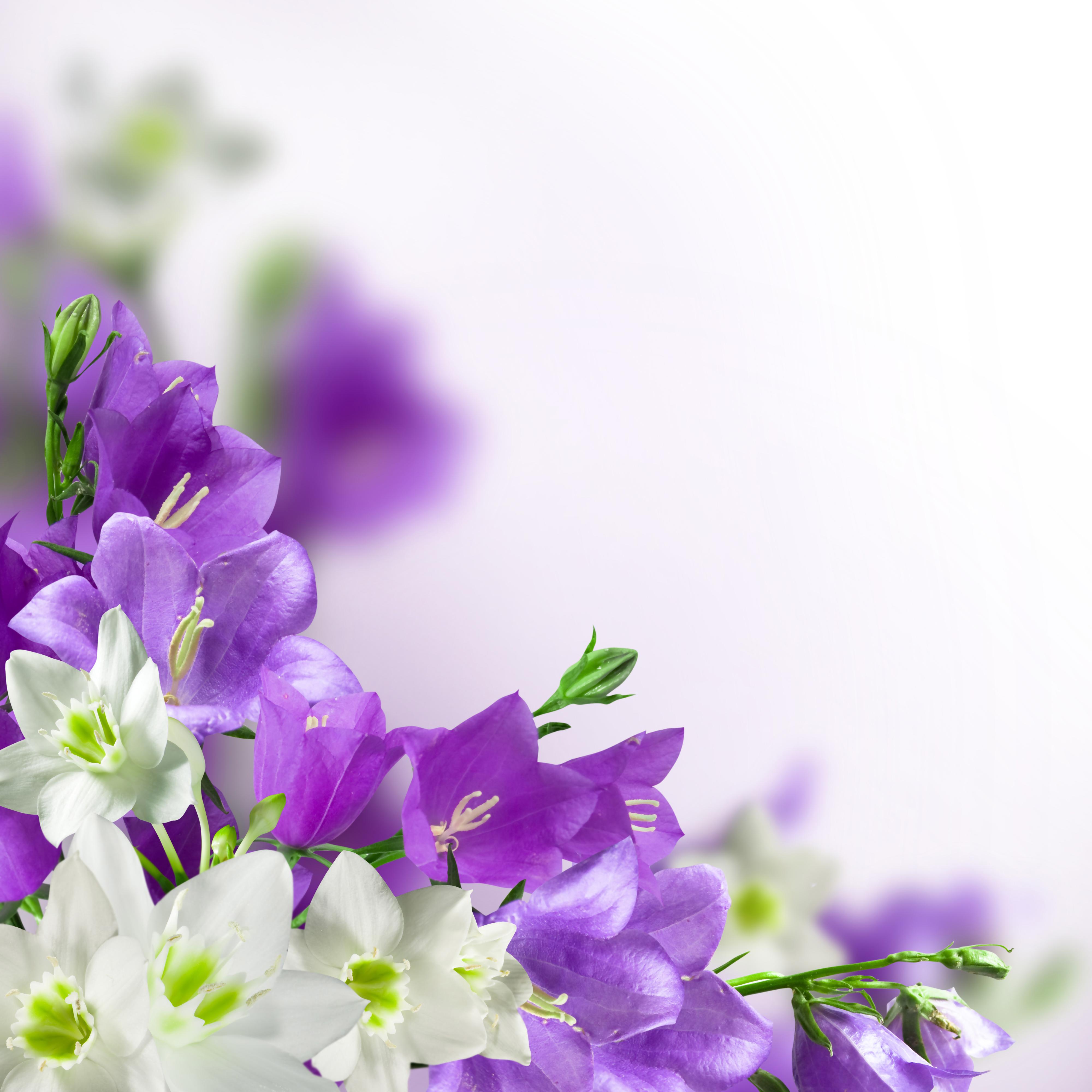 [36+] Purple Flower White Background on WallpaperSafari