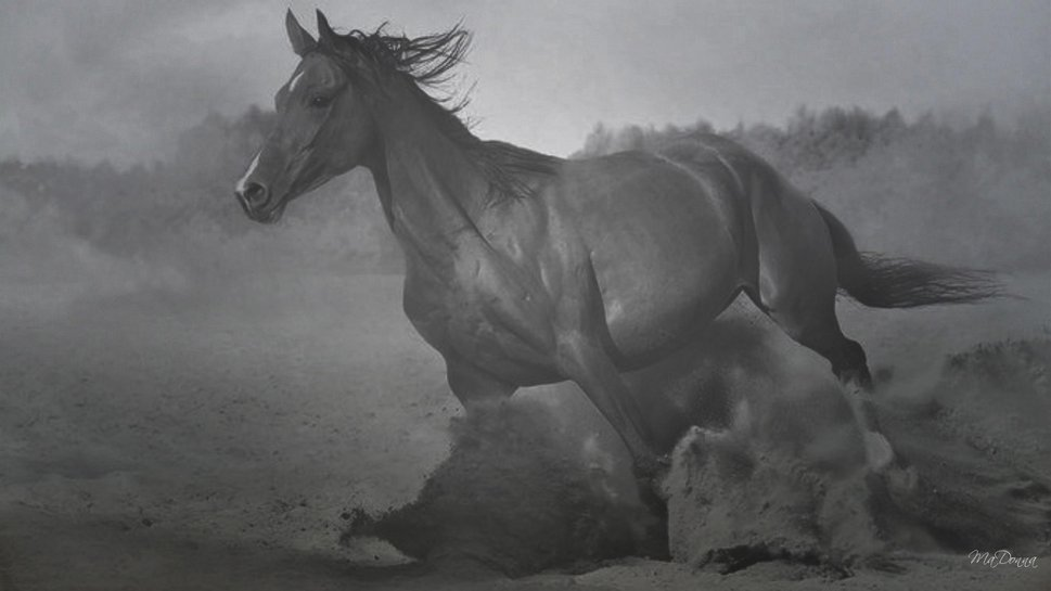 1071322  horse in black and white 6 pjpg 969x545