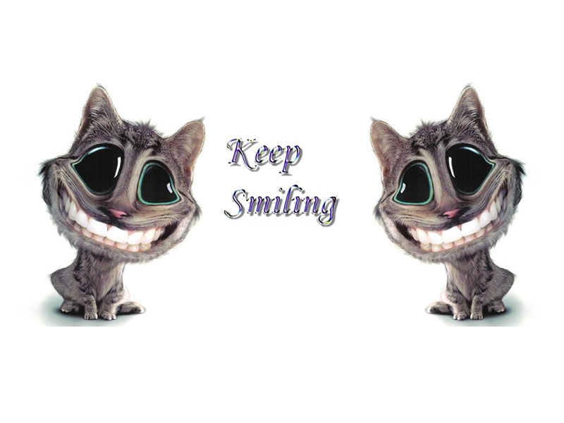 animal display wallpapers: Wallpapers Of Funny Animals